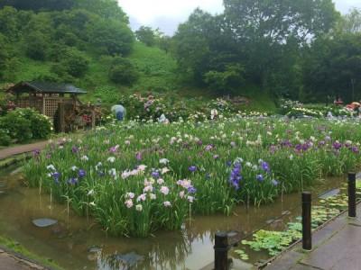 横須賀しょうぶ園