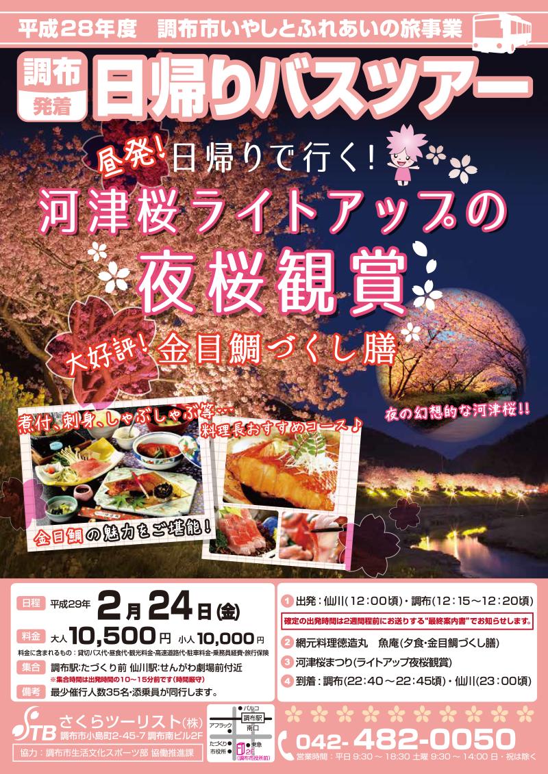 調布市いやしとふれあいの旅事業・平成29年2月・河津桜